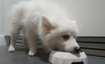 Elegancka miska dla psów i kotów
