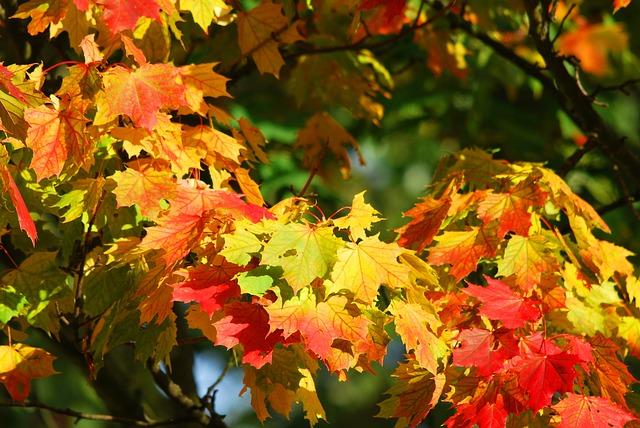 Jak radzić sobie jesienią?