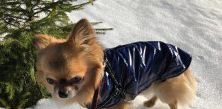 jak wybrać kurteczkę dla psa