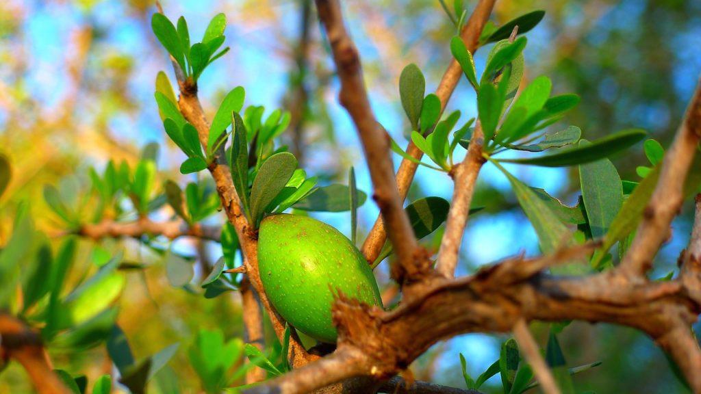 Recenzja kremu arganowego - L'argane