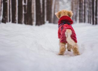 5 rzeczy, które przydadzą się właścicielowi psa zimą